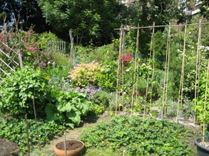 large community garden